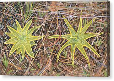Yellow Butterwort In Habitat Canvas Print by Scott Bennett