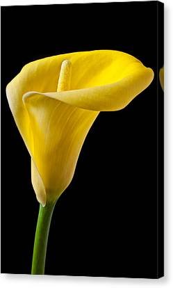 Yellow Calla Lily Canvas Print by Garry Gay