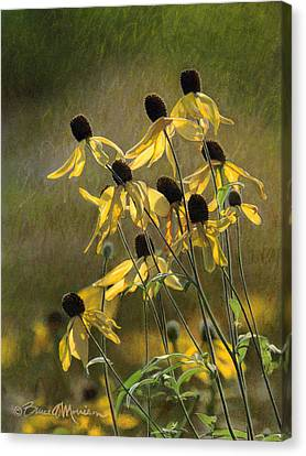 Yellow Coneflowers Canvas Print by Bruce Morrison