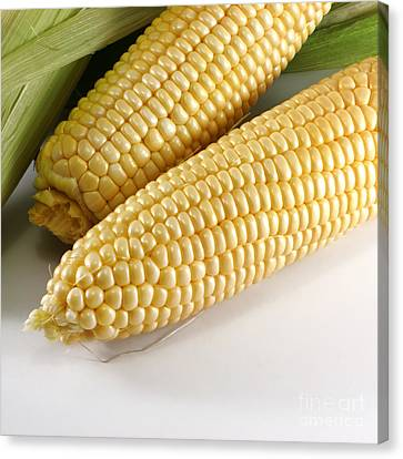 Yellow Corn Canvas Print