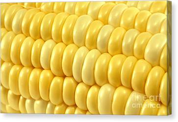 Yellow Corn Macro Canvas Print