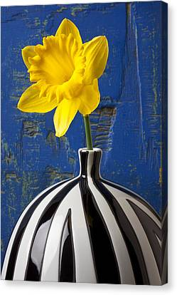 Yellow Daffodil In Striped Vase Canvas Print by Garry Gay