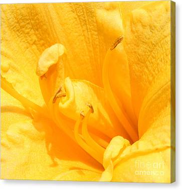 Canvas Print featuring the photograph Yellow Day Lily by Michael Waters