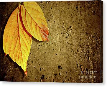 Yellow Fall Leafs Canvas Print by Carlos Caetano