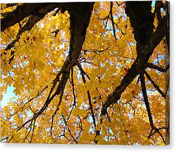 Yellow Fall Trees Prints Autumn Leaves Canvas Print by Baslee Troutman