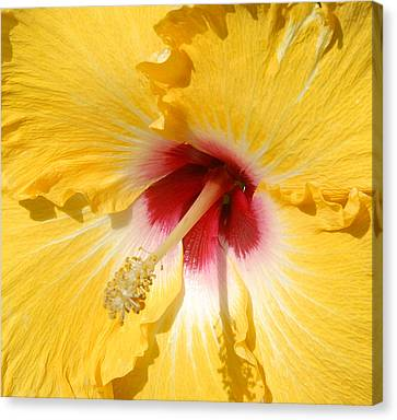 Canvas Print featuring the photograph Yellow Fellow by Cindy Manero