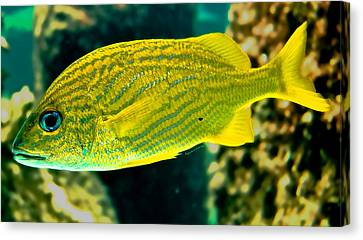 Yellow Fellow Canvas Print by DigiArt Diaries by Vicky B Fuller