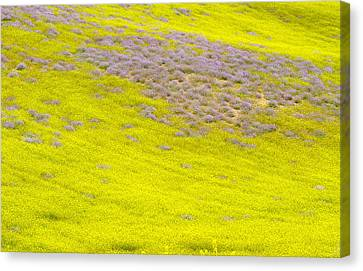 Yellow Fields Canvas Print by Guido Montanes Castillo