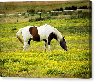 Canvas Print featuring the photograph Yellow Fields Horse by Wendy McKennon