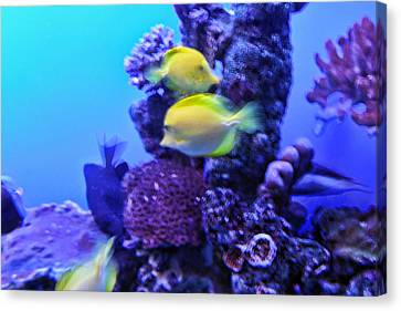 Yellow Fish With Purple Coral Canvas Print by Linda Phelps