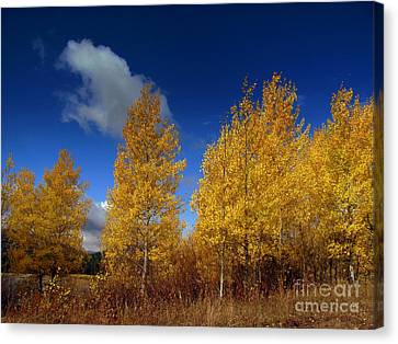 Canvas Print featuring the photograph Yellow Flash by Irina Hays