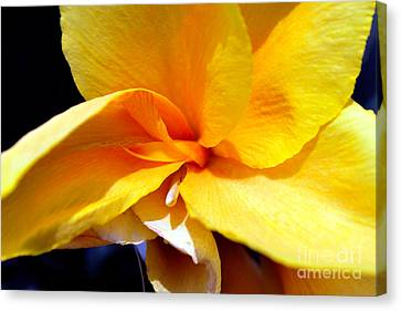 Yellow Flower Canvas Print by Denis Shah