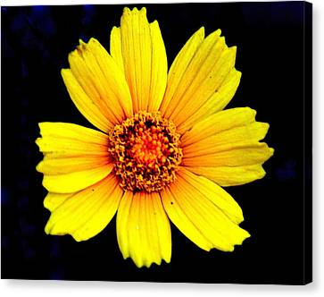 Yellow Flower Canvas Print by Marty Koch