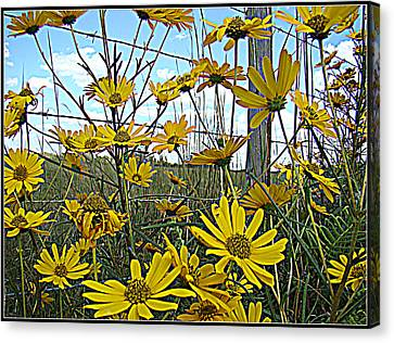 Canvas Print featuring the photograph Yellow Flowers By The Roadside by Alice Gipson