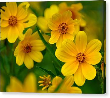 Canvas Print featuring the photograph Yellow Flowers by Marty Koch