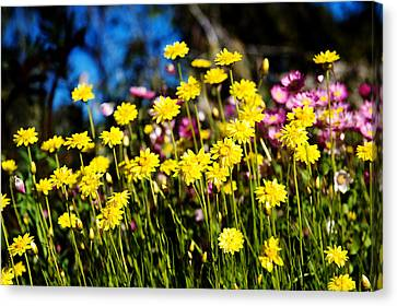 Canvas Print featuring the photograph Yellow Flowers by Yew Kwang