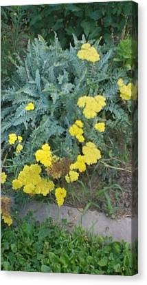 Yellow Garden Flowers And Green Ferns Canvas Print by Thelma Harcum