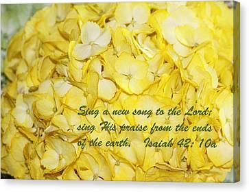 Yellow Hydrangea Isaiah 42v10 Canvas Print by Linda Phelps