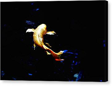 Yellow Koi Canvas Print by Don Mann