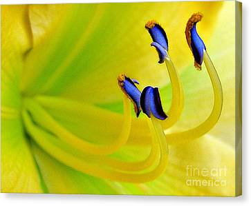 Yellow Lily Canvas Print by Judi Bagwell