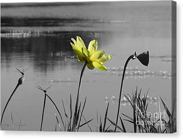 Canvas Print featuring the photograph Yellow Lotus by Deborah Smith