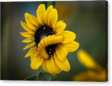 Canvas Print featuring the photograph Yellow On Yellow by Monte Stevens