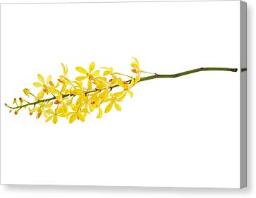 Yellow Orchid Bunch Canvas Print by Atiketta Sangasaeng