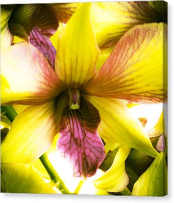 Yellow Orchid Canvas Print by Joe Carini - Printscapes
