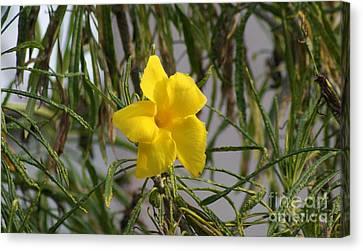 Canvas Print featuring the digital art Yellow Orchid by John  Kolenberg