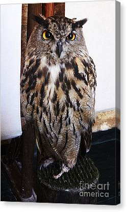 Yellow Owl Eyes Canvas Print
