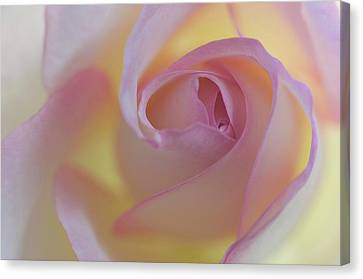 Yellow- Pink Canvas Print by Carolyn Dalessandro