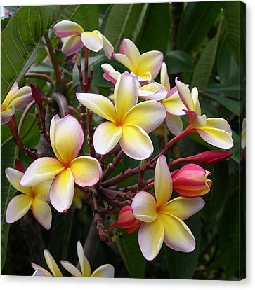 Canvas Print featuring the digital art Yellow Plumeria by Claude McCoy