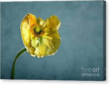 Yellow Poppy Canvas Print by Nailia Schwarz
