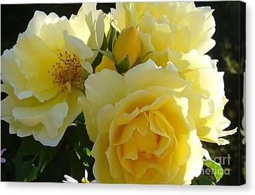 Canvas Print featuring the photograph Yellow Rose by Jim Sauchyn