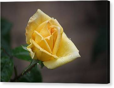 Canvas Print featuring the photograph Yellow Rose Of Texas by Donna  Smith