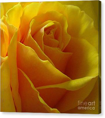 Canvas Print featuring the photograph Yellow Rose Of Texas by Sandra Phryce-Jones