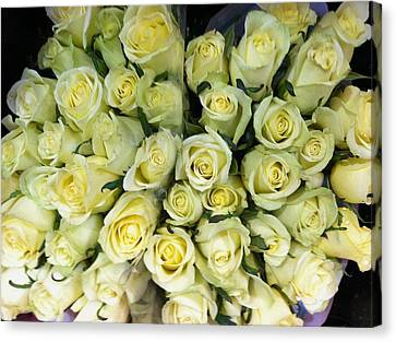 Canvas Print - Yellow Roses by Anna Villarreal Garbis