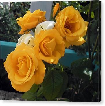 Yellow Roses Canvas Print by Melinda Kortun
