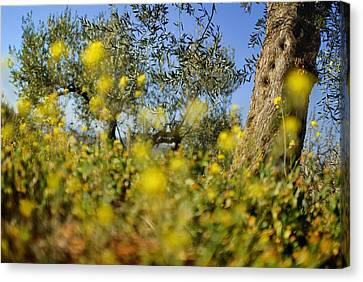 Yellow Spots Canvas Print by Guido Montanes Castillo