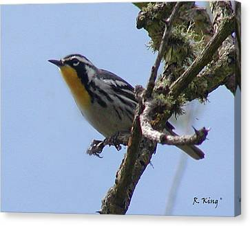 Canvas Print featuring the photograph Yellow-throated Warbler by Roena King