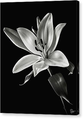 Canvas Print featuring the photograph Yellow Tiger Lily In Black And White by Endre Balogh