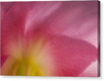 Yellow To Pink  Canvas Print