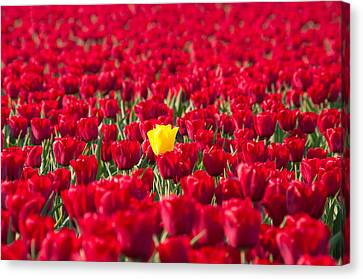 Canvas Print featuring the photograph Yellow Tulip by Hans Engbers