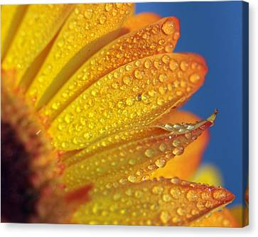 Yellow Wild Flower Canvas Print by the*Glint