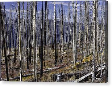 Yellowstone Lake Colors Canvas Print