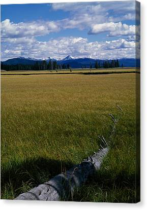 Canvas Print featuring the photograph Yellowstone Log by J L Woody Wooden