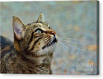 Yes I Am A Pretty Kitty Canvas Print by Debbie Portwood