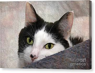 Yes I Took Her Chair Canvas Print by Andee Design