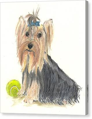 Yorkie Indy At Play Canvas Print by Jessica Raines