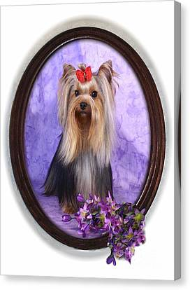 Yorkie With Violets Canvas Print by Maxine Bochnia